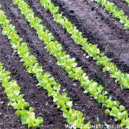 Frühjahr Haus und Garten - Salat/Gemüse - Tauben fernhalten