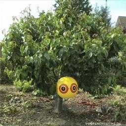 Ballons an Kirschbaum gehängt und Drosseln bleiben weg