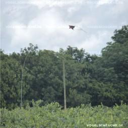 Drachen System - Erfolgreicher Einsatz in Heidelbeeren