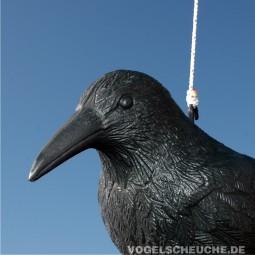 Rabe zur Taubenabwehr Anleitung und Befestigung
